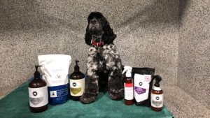 Dog grooming essentials